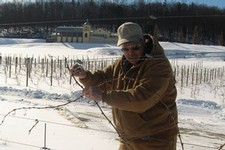 Winter pruning at Heron Hill Winery