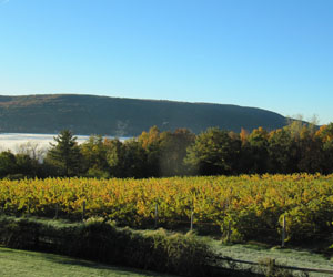 Ingle Vineyard Harvest View Canandaigua Lake