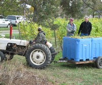 Ingle Vineyard Harvest Tractor Grape Bin
