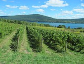 Ingle Vineyard overlooking Canandaigua Lake